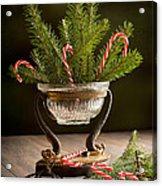 Christmas Pine Acrylic Print