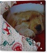 Christmas Pup Acrylic Print