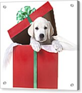 Christmas Puppy Acrylic Print by Diane Diederich
