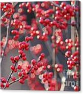 Christmas Sparkles Acrylic Print