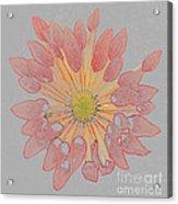 Chrysanthemum As Coloured Pencil Drawing Acrylic Print