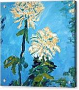 Chrysanthemum Floral Acrylic Print