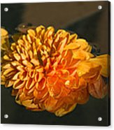 Chrysanthemum Gently Floating In The Fountain Of Campo De Fiori - Rome - Italy Acrylic Print