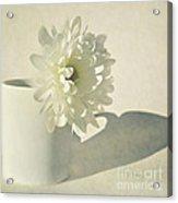 Chrysanthemum Shadow Acrylic Print by Lyn Randle