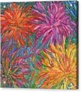 Chrysanthemums Like Fireworks Acrylic Print