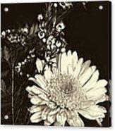 Chrysanthimum Acrylic Print