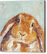 Chubby Bunny Acrylic Print