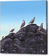Chuckers - Calling In The Flock Acrylic Print by Laird Roberts