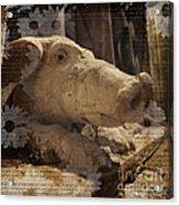 Church Pig Acrylic Print