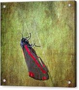 Cinnabar Moth Art Texture Wall Decor. Acrylic Print
