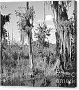 Circle B Swamp Acrylic Print
