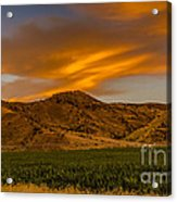 Circle Of Corn At Sunrise Acrylic Print