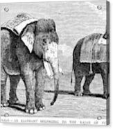 Circus Elephants, 1884 Acrylic Print