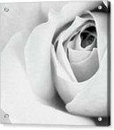 Citrine Rose Bw Palm Springs Acrylic Print