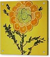Citrus Fruit Acrylic Print