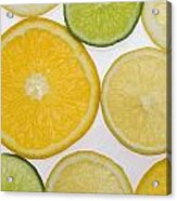 Citrus Slices Acrylic Print by Kelly Redinger