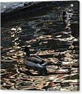 City Ducks 2  Acrylic Print