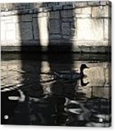 City Ducks Acrylic Print