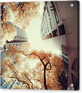 City In Harmony With Nature Acrylic Print