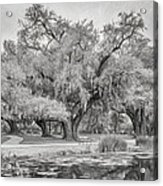 City Park Giants - Paint Bw Acrylic Print