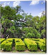 City Park New Orleans Louisiana Acrylic Print