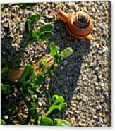 City Snail From Above Acrylic Print