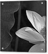 Clarity Of Heart Acrylic Print