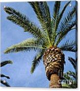 Classic Palms Acrylic Print