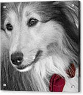 Classy Red Acrylic Print