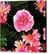 Carnations The Spanish Flower Acrylic Print