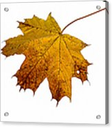 Claws Of The Autumn - Featured 3 Acrylic Print