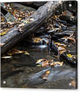 Clean Clear And Natural Acrylic Print by Andrew Pacheco