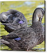 Ducks On Green Acrylic Print