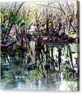Clear Florida Springs Acrylic Print