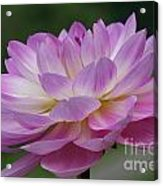 Clearly Gorgeous Acrylic Print