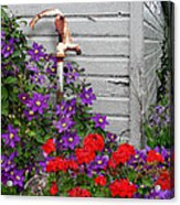 Clematis Cascade Acrylic Print by Doug Kreuger