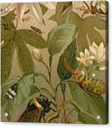 Clematis Cicada And Beetles 1894 Acrylic Print