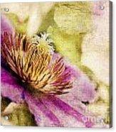 Clematis Closeup Acrylic Print