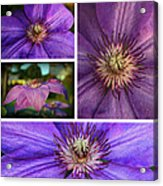 Clematis Collage Acrylic Print