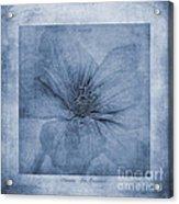 Clematis Cyanotype Acrylic Print