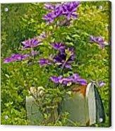 Clematis Vine On Mailbox Photo Art Acrylic Print