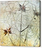 Clematis Virginiana Seed Head Textures Acrylic Print