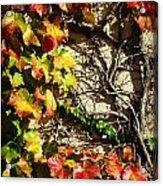 Climbing Color Acrylic Print