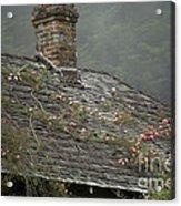 Climbing Roses Acrylic Print by Ron Sanford