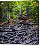 Climbing The Rocks And Roots Of Bald Mountain Acrylic Print