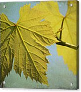 Clinging To The Vine Acrylic Print by Fraida Gutovich