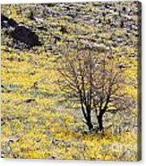 Cloaked In Yellow Acrylic Print