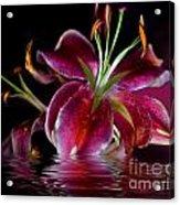 Clorella Acrylic Print