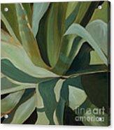 Close Cactus Acrylic Print
