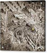 Close Crocodile  Acrylic Print